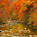 Autumn Stream by Geraldine DeBoer