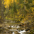 Autumn Stream by Idaho Scenic Images Linda Lantzy