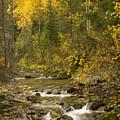 Autumn Stream by Idaho Scenic Images Linda Lantzy