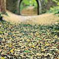 Autumn Stroll by Meirion Matthias