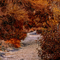 Autumn Stroll No23 by Mark Myhaver