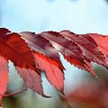 Autumn Sumac by Melissa Hartner