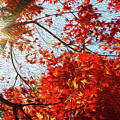 Autumn Sun by Les Cunliffe