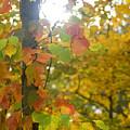 Autumn Sun by Ryan  Krueger