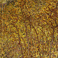 Autumn Sunlight by Robert Reid