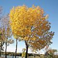 Autumn Sunshine by Deanna Paull