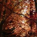 Autumn Sunshine Poster by Carol Groenen