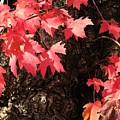 Autumn Surprise by Carolyn Jacob