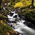 Autumn Swirl by Mike  Dawson