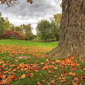 Autumn Tale by Mircea Costina Photography