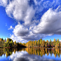Autumn Tamaracks by David Patterson