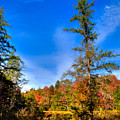 Autumn Through The Trees At Fly Pond by David Patterson