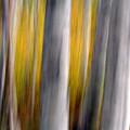 Autumn Timber by Kelly Kellogg