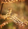 Autumn Tones by Heather Applegate