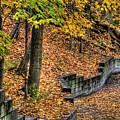 Autumn Trail - Rockyriver Metroparks by Neil Doren