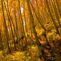 Autumn Trail by David Lee Thompson