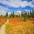 Autumn Trail by Mike  Dawson