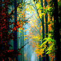 Autumn Trails In Georgia by Rafael Salazar