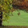 Autumn Tree 1 by Rudi Prott