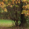 Autumn Tree 2 by Rudi Prott