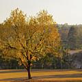 Autumn Tree At Sunset by Neal Tolbert