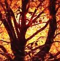 Autumn Tree by Charmaine Zoe