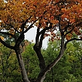 Autumn Tree II by Merrimon Crawford