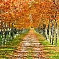 Autumn Tree by Julien Fourniol/Baloulumix