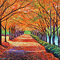 Autumn Tree Lane by David Lloyd Glover