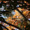 Autumn Trees 2015 Pa 01 by Thomas Woolworth
