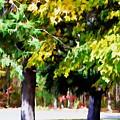 Autumn Trees 7 by Jeelan Clark