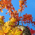 Autumn Trees Artwork Fall Leaves Blue Sky Baslee Troutman by Baslee Troutman
