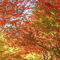 Autumn Trees Digital Watercolor by Randy Herring