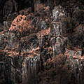Autumn Trees Growing On Mountain Rocks by Jorgo Photography - Wall Art Gallery