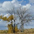Autumn Trees II by Merrimon Crawford