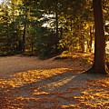 Autumn Trees Near Lake by Elena Elisseeva