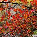 Autumn Trees Rock City by Lori Mahaffey