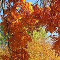 Autumn Trees by Shylee Charlton