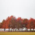 Autumn Trees by Zoltan Schadel