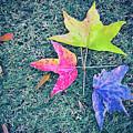 Autumn Trio by Iryna Goodall
