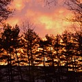 Autumn Twilight by Sonali Gangane