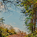 Autumn Up Hill by Kerri Farley