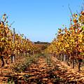Autumn Vines by K McCoy