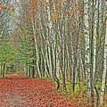 Autumn Walk by Andrea Jahn