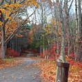 Autumn Walk At West Thompson Lake  by Neal Eslinger