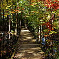 Autumn Walk by Debbie Oppermann