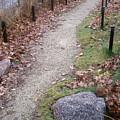 Autumn Walk by Jan Gilmore