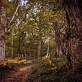 Autumn Walk by Nick Tayman