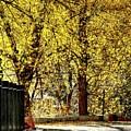 Autumn Walkway by Jerry Sodorff