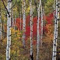 Autumn Warm by Leland D Howard